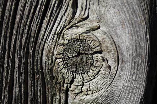 L'oeil de l'arbre (Photo CC Bulbocode909 sur flickr)