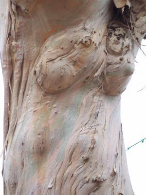Corps de femme nue dans l'arbre